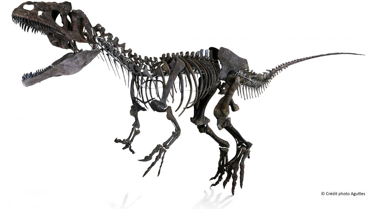 Primicia mundial: ¡un esqueleto de dinosaurio en la Torre
